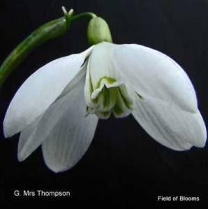 Gal . Mrs Thompson (2)